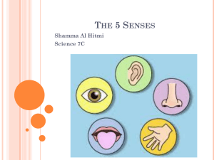 The 5 Senses - Qatar Academy