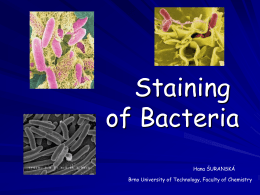 Staining of bacteria