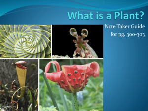 What is a Plant? - local.brookings.k12.sd.us