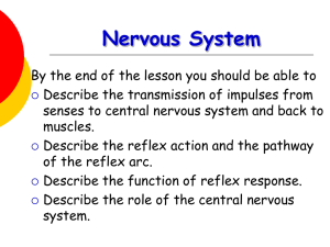 Nervous system - World of Teaching