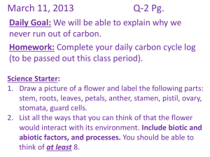 The Carbon Cycle - MsPetersensScienceScholars