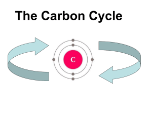 The Carbon Cycle - M. Lang Standring