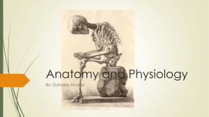 Anatomy and Physiology - U