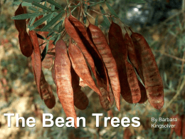 The Bean Trees By: Barbara Kingsolver