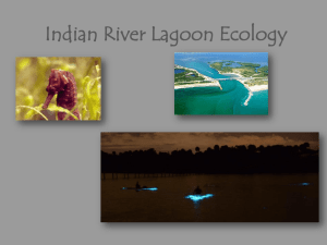 Indian River Lagoon Ecology