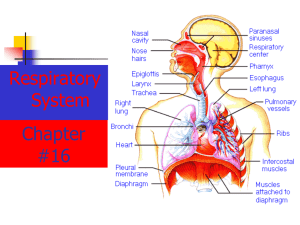 The Respiratory system includes tubes that