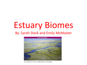 Estuary Biomes By: Sarah Stark and Emily McMaster