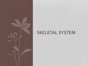 Skeletal system - local.brookings.k12.sd.us