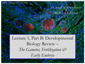 Slides - Workforce Development in Stem Cell Research
