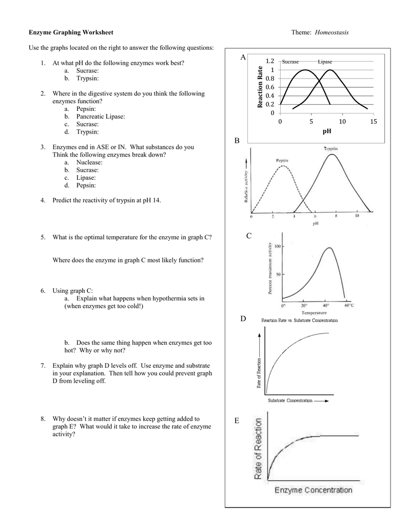 Enzyme Graphing Worksheet