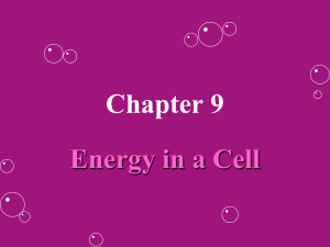Chapter 9 - BickfordBiology