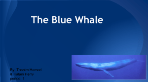 The Blue Whale - local.brookings.k12.sd.us