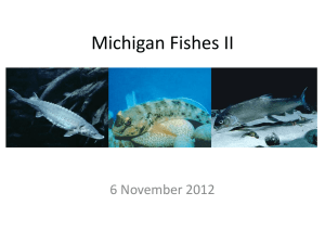 Michigan Fishes II Powerpoint