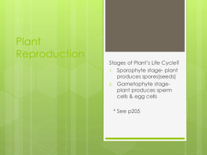 6.2 Plant Reproduction