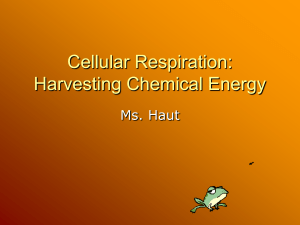 Ch. 6 Cellular Respiration