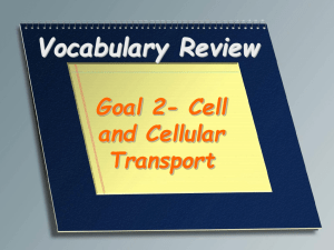 Vocabulary Review- Cells and Cellular Transport