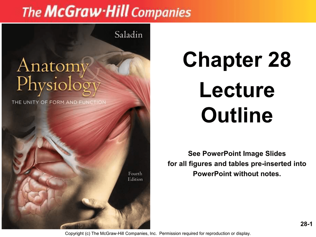 Unique Mcgraw Hill Anatomy And Physiology Saladin Image Collection ...