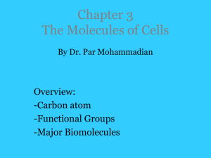Chapter 3: The Molecules of Cells