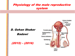 2. Physiology of the testis 2015