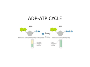 ADP-ATP CYCLE