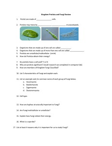 Kingdom Protista and Fungi Review 2