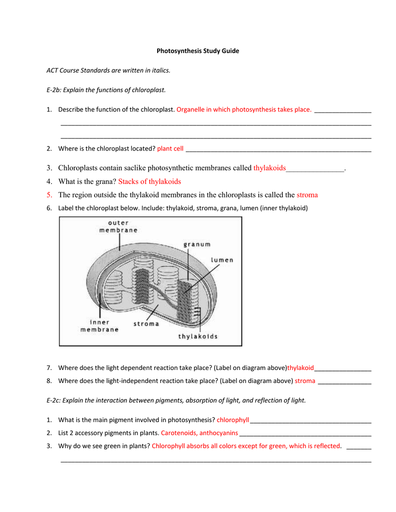 Photosynthesis Study Guide Answer Key – Photosynthesis Diagram Worksheet Answers