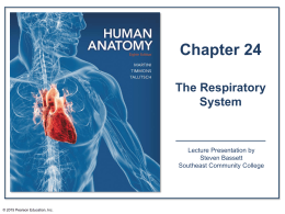 The Lower Respiratory System