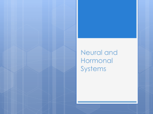 Neural and Hormonal Systems