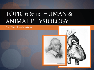 Topic 6 & 11: Human Health & physiology