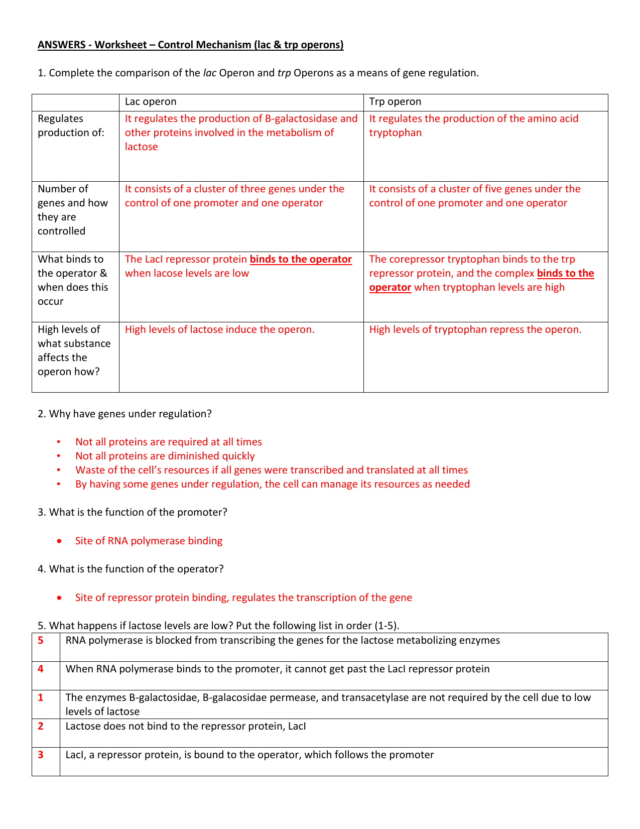 Rna And Gene Expression Worksheet Answers