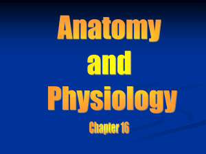 Anatomy chapter 16 (Respiratory System)