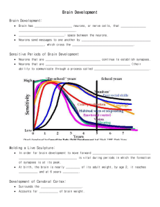 Brain Development Notes