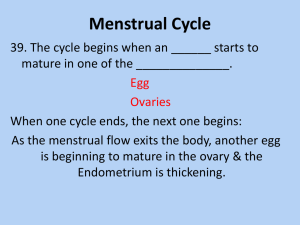 Menstrual Cycle 8th Grade Health