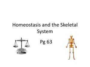 Homeostasis and Skeletal System