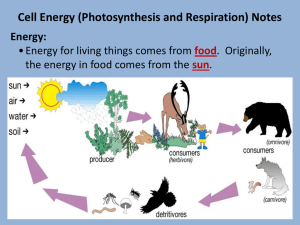 Cell Energy Ppt.
