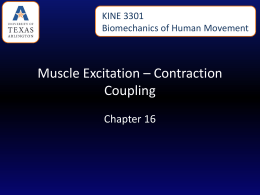Muscle Excitation – Contraction Coupling