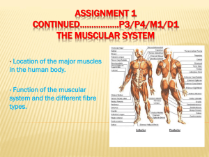 Assignment 1 continued*****..P3/P4/M1/D2 The muscular system