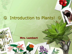 Plants pp-gl - Mrs-Lamberts-Biology