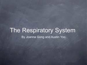 By Joanna Gong and Austin Yoo The Respiratory System Key