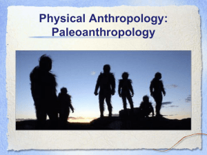 Physical Anthropology: Paleoanthropology