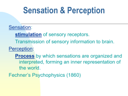 sensation and perception paper