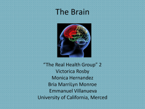 The Brain Presentation