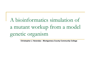 A bioinformatics simulation of a mutant workup from a model genetic