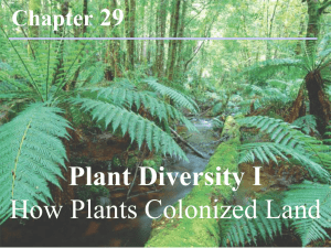 Chapter 29 Plant Diversity I How Plants Colonized Land