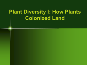 Chapter 29: Plant Diversity I: How Plants