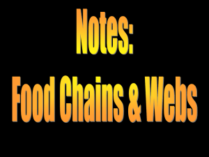 Food Chains & Webs Notes