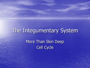 Integument 2 - Overview of Cell Cycle and DNA
