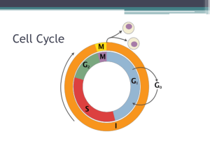 Notes: Cell Cycle