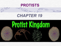 origin of protists