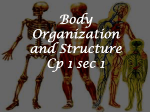 Body organization and Structure cp1-1 - cohick